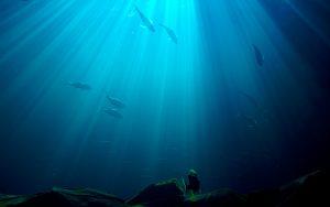 Sources d'omégas 3 indispensables à notre organisme, les poissons gras sont aussi pollués. Combien faut-il en consommer par semaine ? Isabelle Doumenc naturopathe, photo libre de droits, stockvault.net